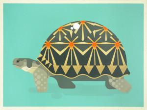 Radiated-turtle_720